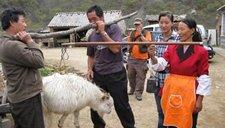 只因为卖羊起争执 儿媳怒气砍死78岁婆婆