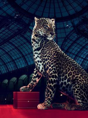 豹 豹子 壁纸 动物 桌面 300_400 竖版 竖屏 手机