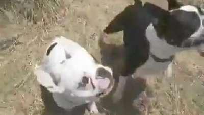 搞笑动物!爆笑的会说话狗狗