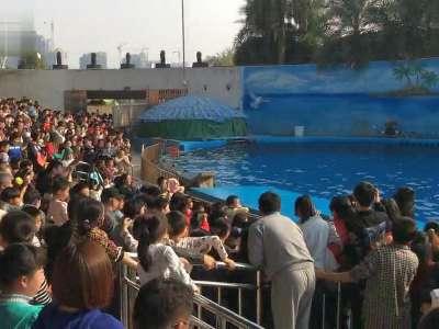 南昌动物园的海狮- 在线观看
