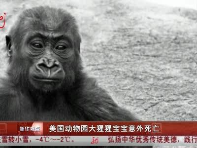 美国动物园大猩猩宝宝意外死亡