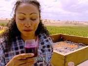 勇闯天涯2-Wine Trails New & Old World(葡萄酒之旅:新旧世界)