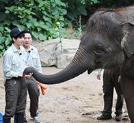 王俊凯为小象洗澡