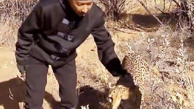 极速动物世界之非洲 韩庚探险非洲爱抚野豹