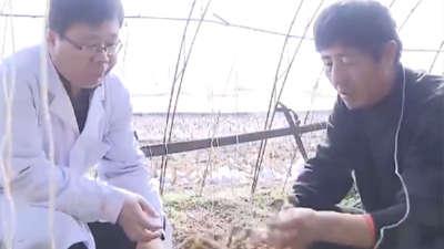 如何有效防治根结线虫 珍果奇树扎堆种