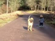 好朋友就是这样滴 男孩和狗狗的有爱散步