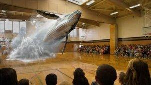篮球场跃出鲸鱼掀巨浪