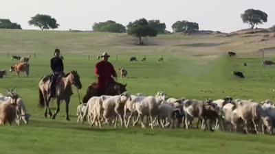 锡林郭勒草原之旅 体验纵马狂奔的狂野