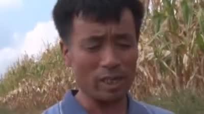 老钟高招栽培软枣子 农场节水滴灌作用大