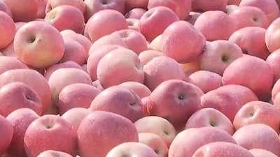 河蟹冰下跑冰冻不掉膘 苹果滞销果农盼收购