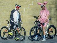 熊猫大战粉红兔 恶意卖萌不如相约骑车