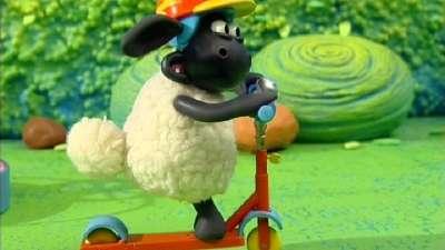 小小羊提米13