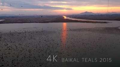 贝加尔湖畔的群鸟之舞