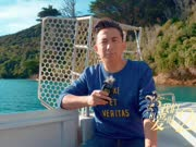 新西兰旅游第二天 黄磊一家乘船上岛参与环保活动-我们相爱20年0921