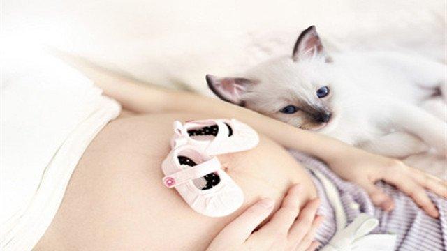 怀孕了就真不能养宠物了吗?