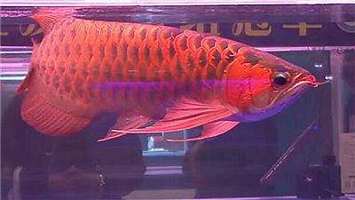 世界观赏鱼锦标赛