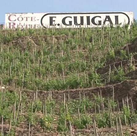 罗纳河北部葡萄酒世界