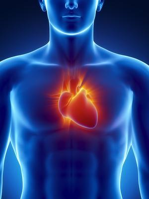 心脏和大脑谁主沉浮