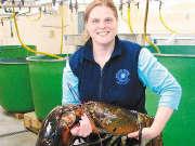 深海食堂 野生深海捉捕巨型龙虾