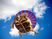 不怕脸着地 纵身一跃 只管跳伞