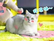 夏日猫咪散热法【举起爪儿来】