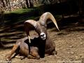 我的动物朋友 羚羊