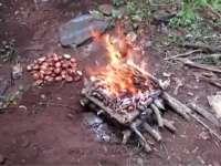 《极限荒野生存教学》第五期 有毒也能当主粮