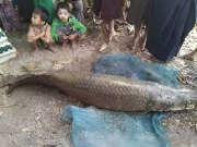寺庙内现2米长寿鱼王 估值约百万元