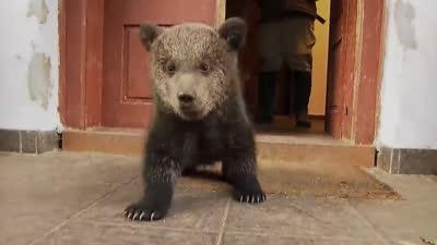 熊宝贝成长记(上)