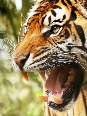 《动物园的野生世界》第一季