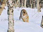 野猫——隐藏在德国的森林