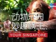 360°VR新加坡:动物乐园 妙趣横生