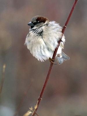 Sparrow on the planet