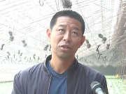 """《黑土地》20161227:""""土台子""""变成""""金台子""""  荷兰黄瓜长兴不衰"""