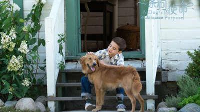 《一条狗的使命》原片片段  亲子专场俘获萌娃家长心