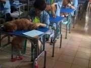 圣宠宠物美容学校学员泰迪实操,一人一只哦