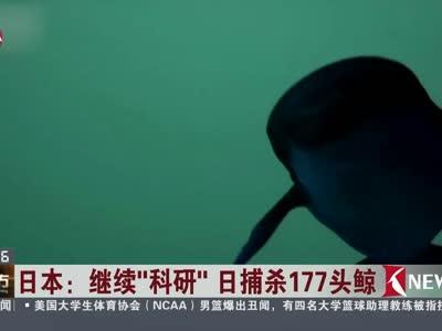"""[视频]日本:继续""""科研"""" 日捕杀177头鲸 """"科研""""实为""""食鲸"""""""