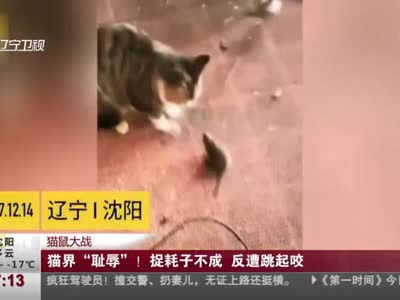 """[视频]猫鼠大战:猫界""""耻辱""""!捉耗子不成 反遭跳起咬"""