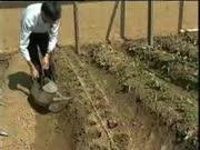 大棚草莓无土栽培技术视频-在线收看