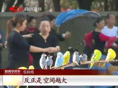 [视频]德阳:大爷遛鸟不用笼子 人鸟和谐成风景