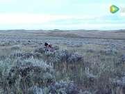 男子使用猎狗和猎枪杀死野狼残忍过程