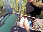 钓鱼:野生鲫鱼和鲤鱼,钓了一大桶
