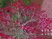 《广西故事》第75集:赤色龙州 风云岁月