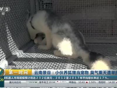 [视频]云南景谷:小伙养狐狸当宠物 臭气熏天遭举报