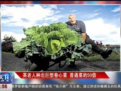 [视频]英老人种出巨型卷心菜 普通菜的50倍