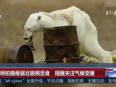 [视频]摄影师拍摄瘦弱北极熊觅食 提醒关注气候变暖