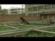 黄鳝生态养殖技术视频_网箱养殖黄鳝视频