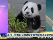 澳门:双胞胎大熊猫宝宝春节将首次全家亮相
