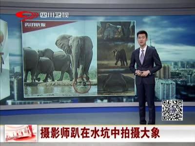 [视频]摄影师趴在水坑中拍摄大象