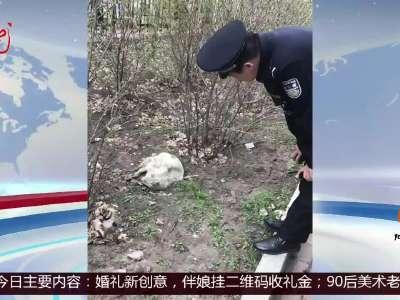"""[视频]哈尔滨:受伤小狐狸 自己去""""就医"""""""